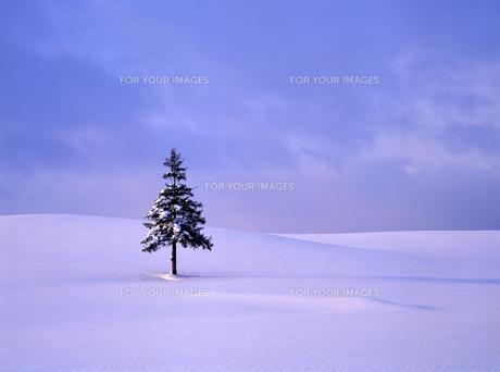 雪原とクリスマスツリーの木の素材 [FYI00103566]