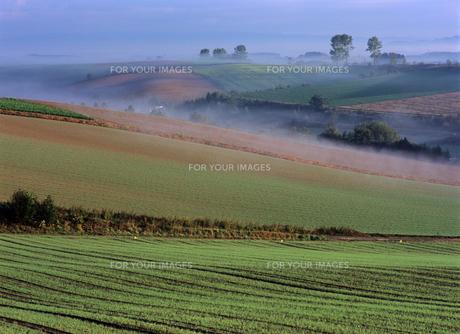 霧の丘の素材 [FYI00103571]