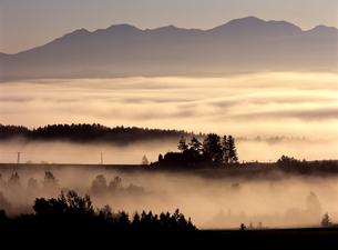 朝霧の丘の写真素材 [FYI00103573]