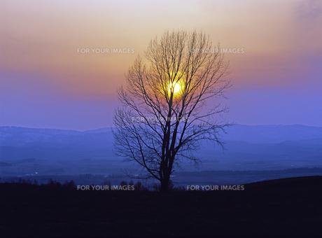 夕陽と大木の素材 [FYI00103583]