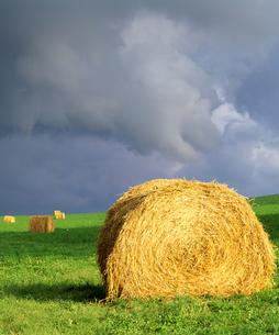 雨上がりの牧場の素材 [FYI00103597]