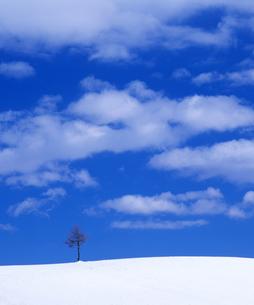 雪原と青空の写真素材 [FYI00103601]
