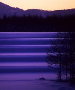 紫の耕地の素材 [FYI00103611]