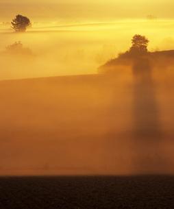 朝霧の丘の写真素材 [FYI00103615]