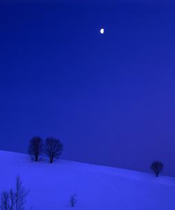 冬の木立と半月の素材 [FYI00103618]