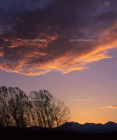 朝雲と並木の素材 [FYI00103620]