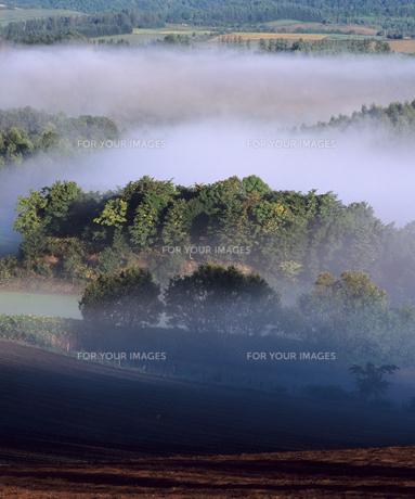 朝霧の丘の写真素材 [FYI00103621]