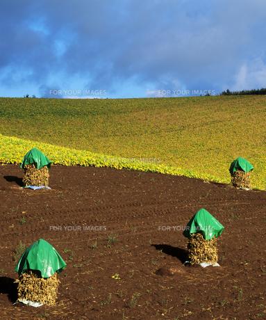 収穫の丘の素材 [FYI00103628]