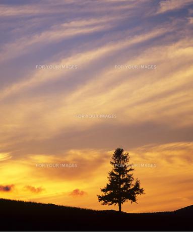 夕焼けの丘の素材 [FYI00103629]