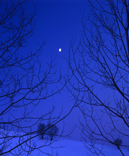 林と月の素材 [FYI00103630]