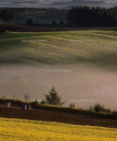 霧と黄金の丘の素材 [FYI00103636]