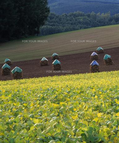 収穫の丘の素材 [FYI00103637]