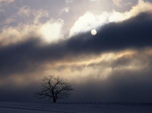冬の太陽の素材 [FYI00103642]