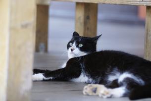 猫の写真素材 [FYI00103650]