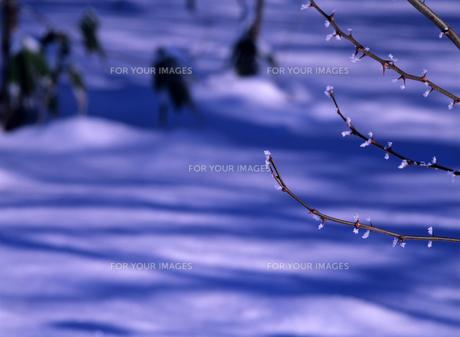朝の雪原の素材 [FYI00103653]