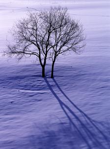 冬の木蔭の素材 [FYI00103667]