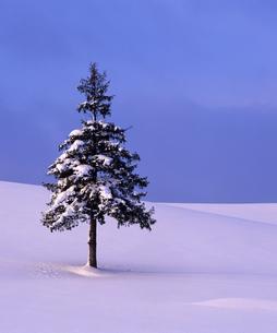 冬のクリスマスツリーの写真素材 [FYI00103700]