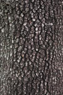 木の肌の写真素材 [FYI00103734]