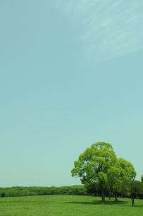 新緑の大地の素材 [FYI00103879]