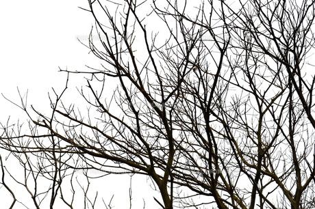 冬の木の写真素材 [FYI00105457]