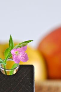 一輪挿しの小さな花の写真素材 [FYI00105462]