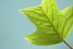leafの写真素材 [FYI00105611]
