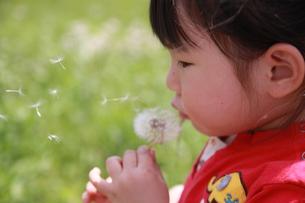 たんぽぽの綿毛を吹く少女の写真素材 [FYI00105663]