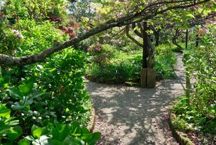 新緑の庭園の写真素材 [FYI00105824]