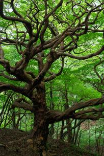 裸の木の写真素材 [FYI00105876]