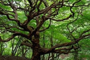 裸の木の写真素材 [FYI00105893]