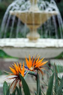 極楽鳥花の写真素材 [FYI00105898]