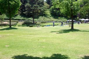 パターゴルフの写真素材 [FYI00105901]