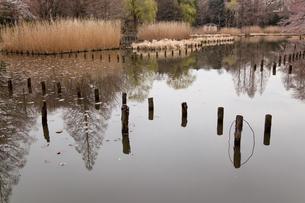沼地の写真素材 [FYI00106436]