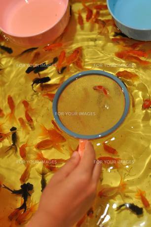 金魚すくいの写真素材 [FYI00106548]