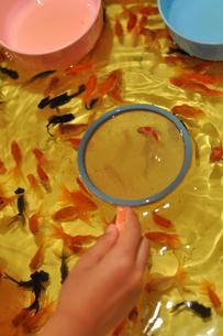 金魚すくいの素材 [FYI00106548]