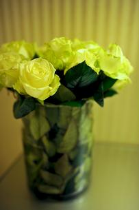 黄色いバラの写真素材 [FYI00106651]