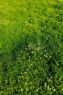 一面の緑の写真素材 [FYI00106676]