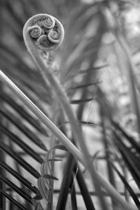 南国のヒカゲヘゴの写真素材 [FYI00106874]