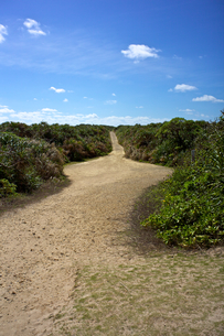 クバ林の一本道の写真素材 [FYI00106920]