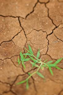 乾いた大地の生命の素材 [FYI00107010]