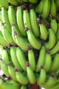 バナナの写真素材 [FYI00107019]