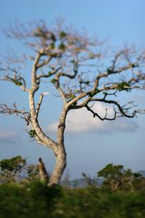 南国の一本の木の写真素材 [FYI00107038]