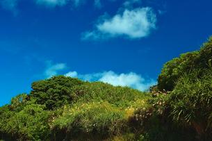 久高島の写真素材 [FYI00107070]