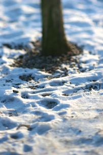 北欧の雪景色の写真素材 [FYI00107135]