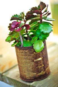 観葉植物の写真素材 [FYI00107351]