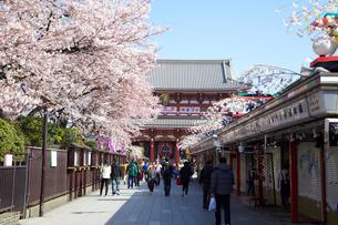 浅草寺の桜の写真素材 [FYI00107772]