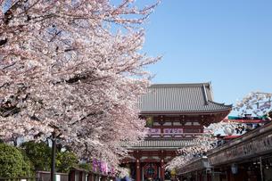 浅草寺の桜の写真素材 [FYI00107780]
