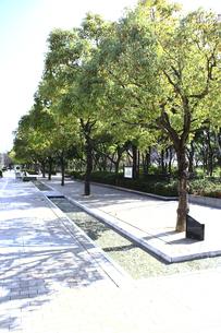 神戸市フラワーロード緑水並木歩道の写真素材 [FYI00107831]