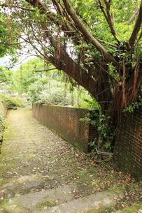 金瓜石 樹木の写真素材 [FYI00107833]