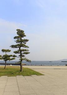 舞子東海浜緑地の松の写真素材 [FYI00107835]